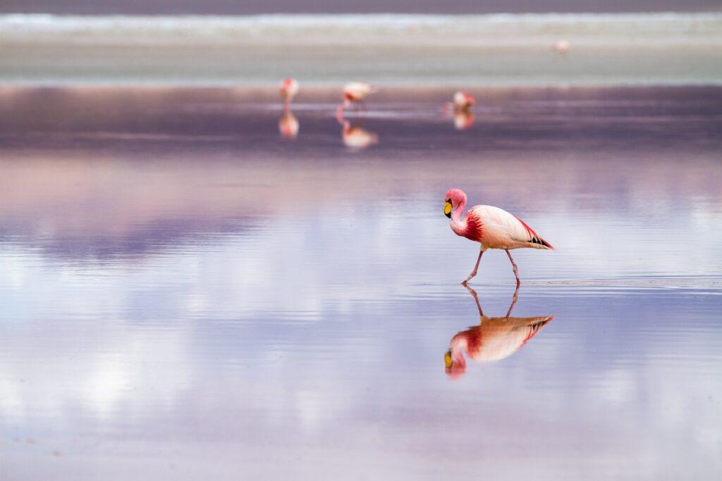 Friday's Flamingo Five